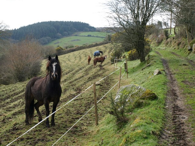 Horses by the track, Northwood