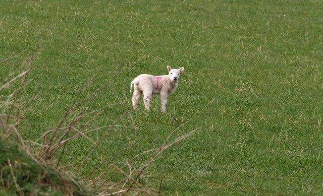 Lamb, Lamelgate
