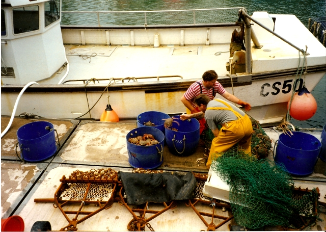 Weymouth - Sorting the Catch