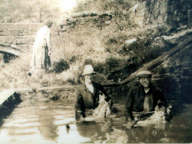 Dipping sheep Circa 1930 at Booth