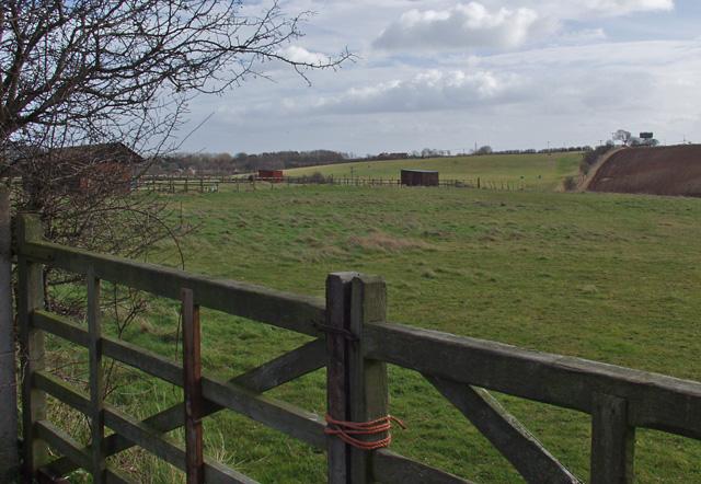 Pasture on White Gap Road