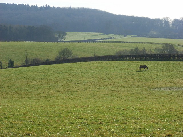 Horse grazing, Hurley