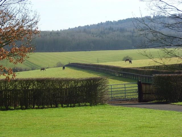 Horses grazing, Hurley