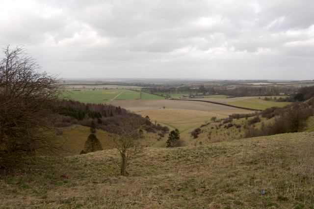 The Warren and White Hill