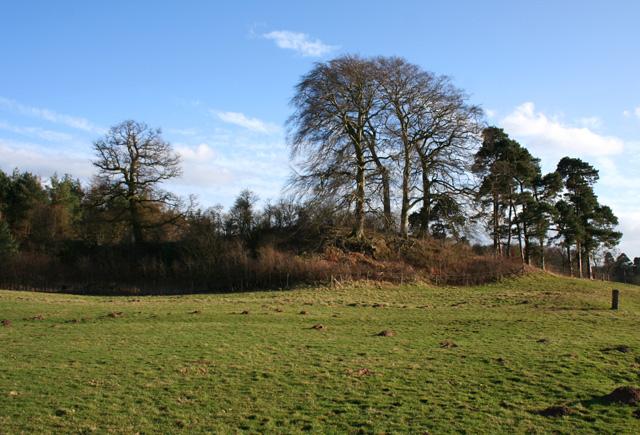 Hummock near Coronation Wood