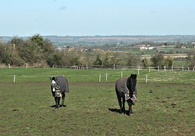 2008 : Horses, Bullenhill near Steeple Ashton