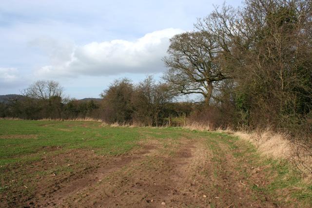 Field boundary in arable field