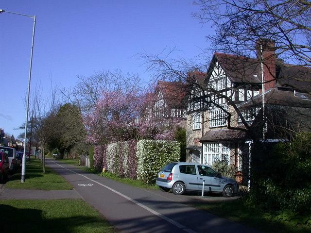 Candy-stripe hedging, Barton Road