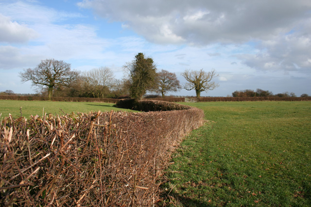 Fields near Egerton Green
