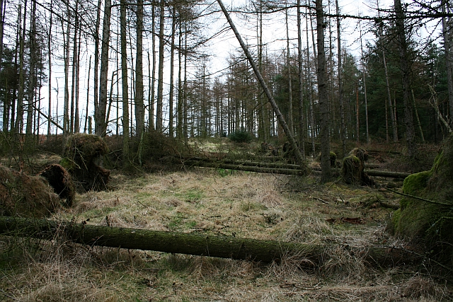 Blocked Track in Cropton Forest