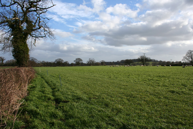 Sheep pasture near Egerton Green
