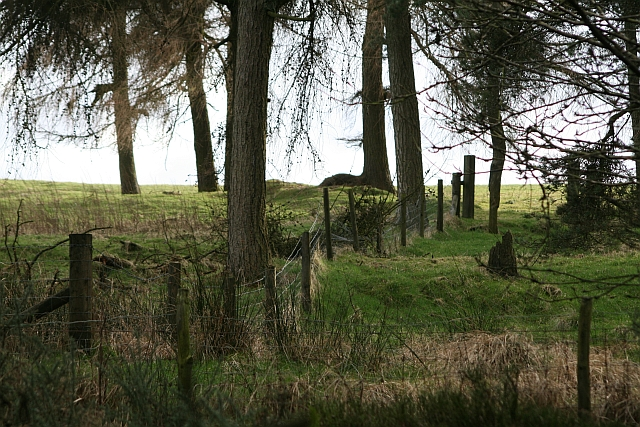 Trees and Fence South of Blawath Road