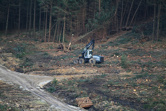 Tree Felling Machine in Cropton Forest