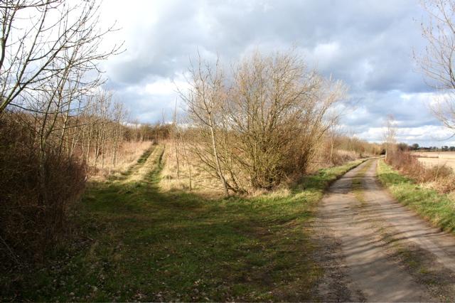 Tracks diverging near Priory Farm