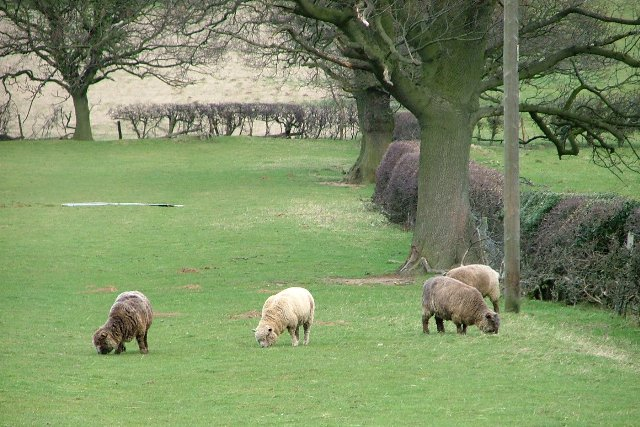 Sheep Pasture, Broughton Bank's Farm
