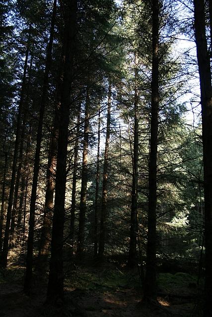 Morning Sunshine Through Trees