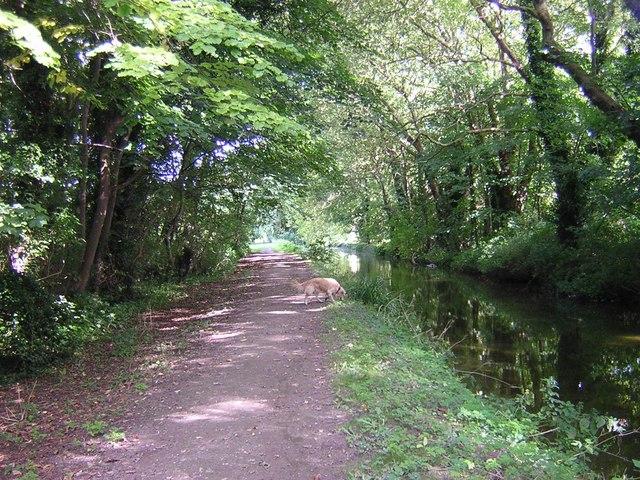 Bottisham Lode adjacent to Anglesey Abbey