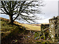 NC7204 : Abandoned croft, Little Rogart by sylvia duckworth