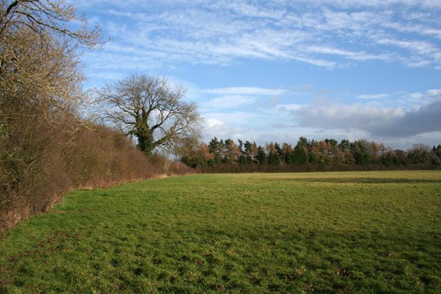 Pasture and plantation, near Bankhouse Farm