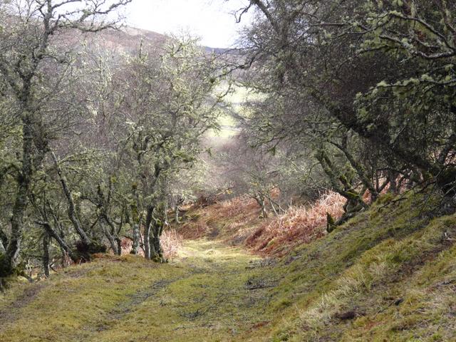 Old track, Little Rogart