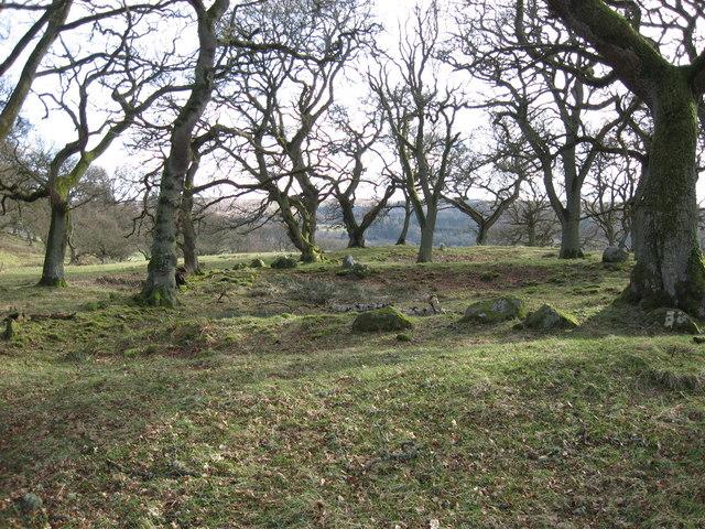 Romano-British farmstead in Riding Wood