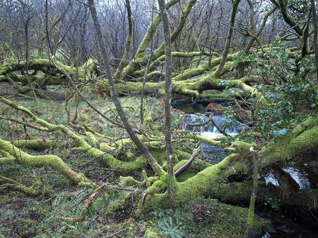 Stream across access land, Tregarrick