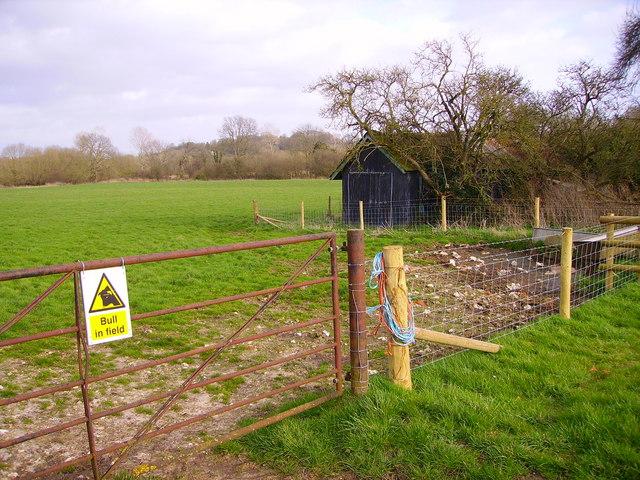 Longstock - Bull in The Field