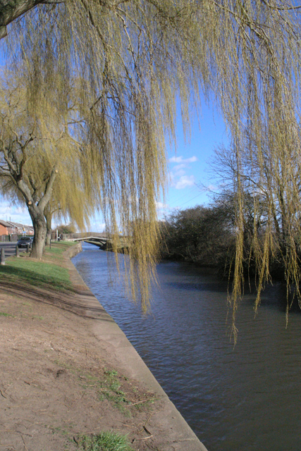 Beeston Canal willows
