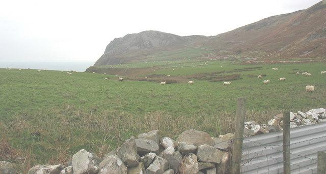 Sheep grazing on the coastal platform above Porth Pistyll