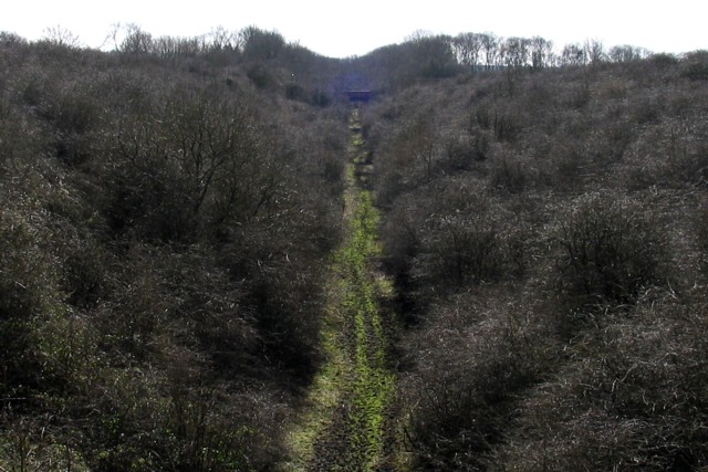 Old Railway Cutting in March 2008