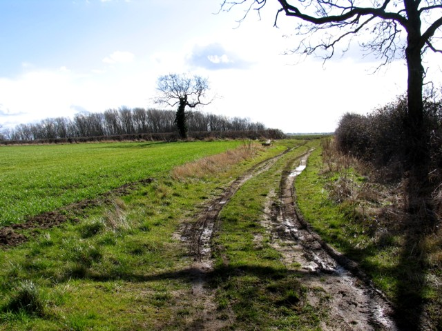 View from Pasture Lane towards Folville Spinney