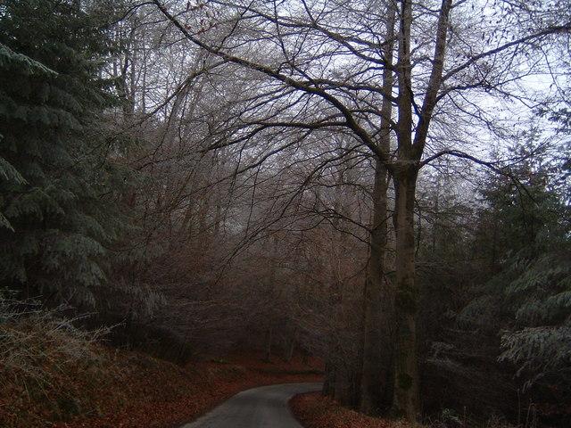 Coed Brycheiniog - Brecknock Forest