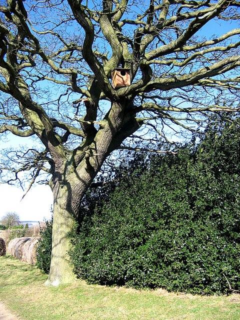 Nesting box for owls, Stotgate Farm