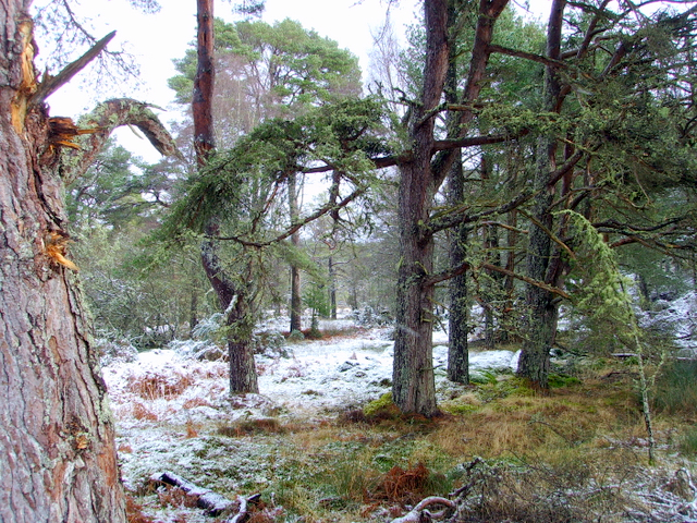 Clashmore Wood