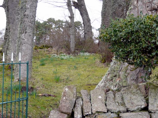 Cottage garden near Fload
