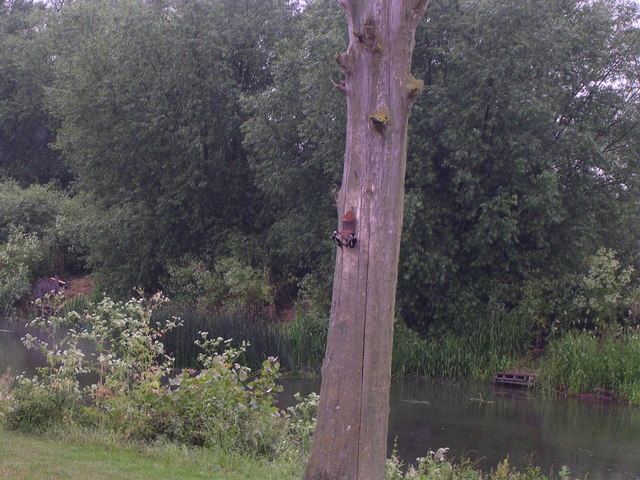 Woodpeckers at work, Offenham Park