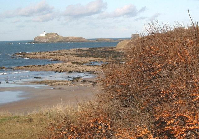 Winter sea buckthorn