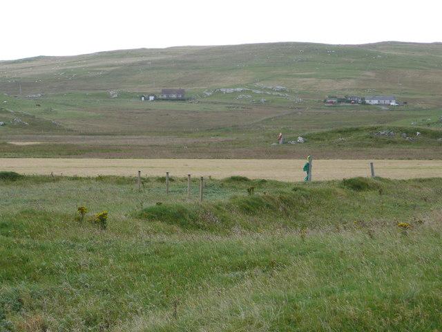 Oat field on the machair