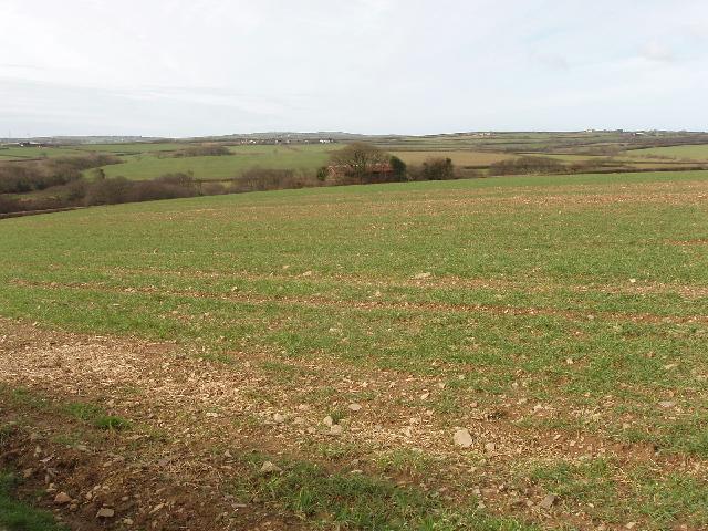 Field opposite Exemoor Farm