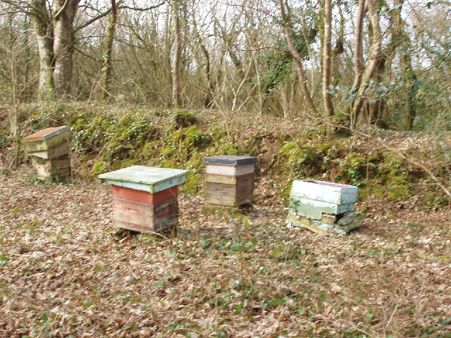 Beehives by Exe Water Bridge