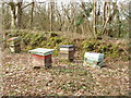 SX2193 : Beehives by Exe Water Bridge by David Hawgood