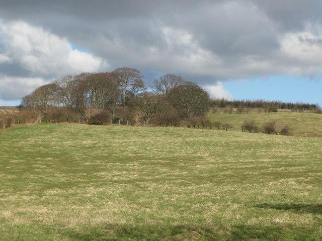 Pastures above Cor Burn