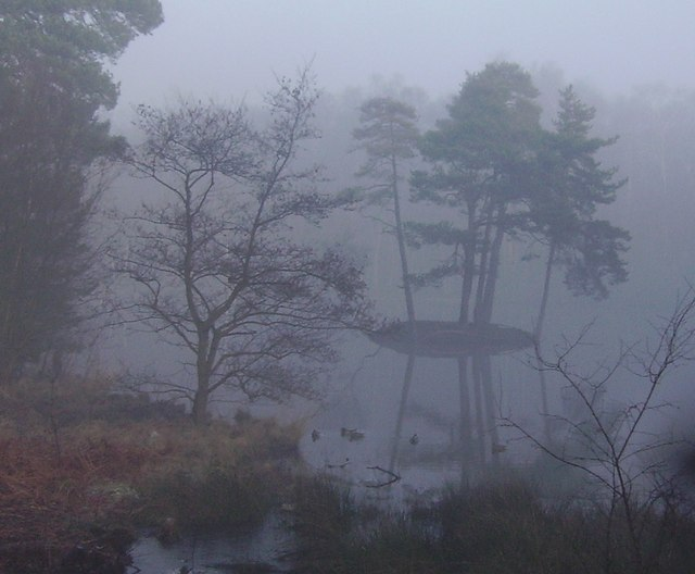 Heath Pool in the mist