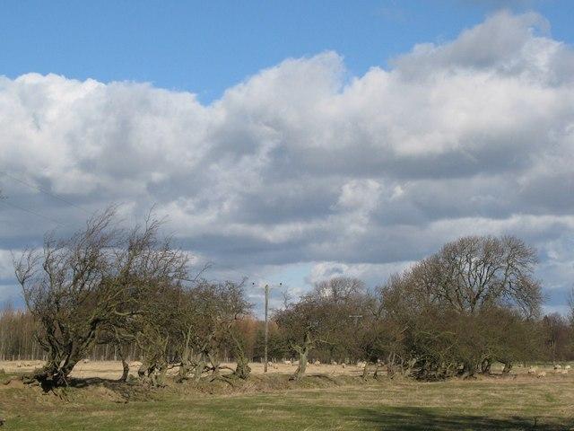 Pastures near Stob Hill