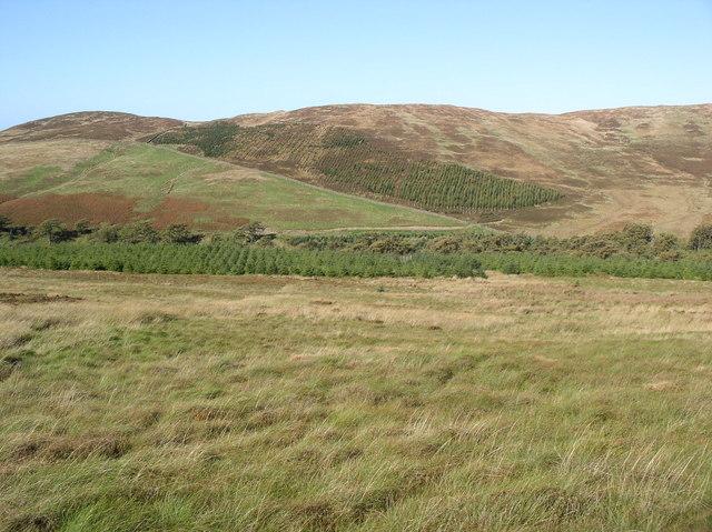 Plantation on Smyrton Hill