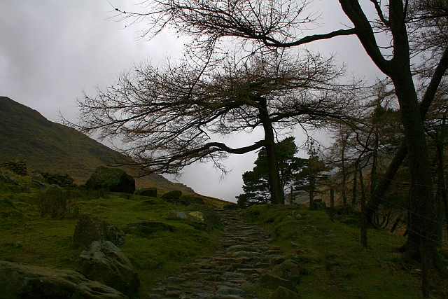 Bridleway and Trees by Styhead Gill
