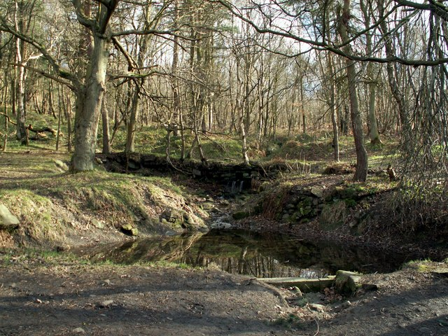 A pond in Wharncliffe Woods