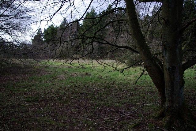 Tree at Wykeham