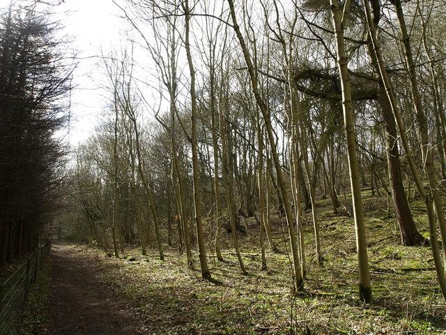 Southwold Plantation in Elloughton Dale