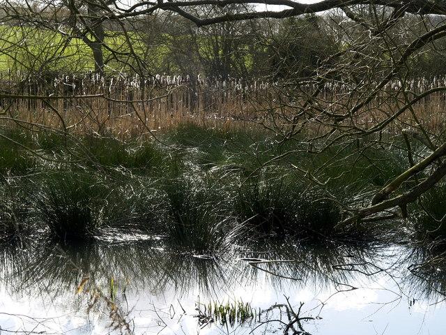 Wauldby Dam (pond)